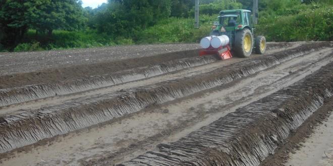 Investimento na exploração agrícola: candidaturas abertas até 7 de junho