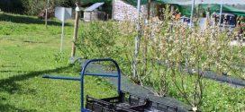 Carrinhos de colheita para venda