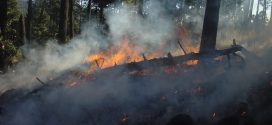Incentivos às explorações agrícolas danificadas pelos incêndios
