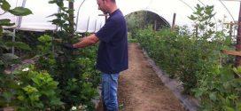 Reabriram as candidaturas ao PDR2020 – Jovens Agricultores
