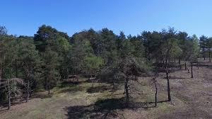 Florestação de terrenos agrícolas e não agrícolas – candidaturas abertas