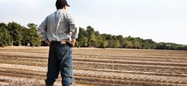 Candidaturas abertas para jovens agricultores nos territórios de baixa densidade