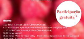 Município de Vagos promove visita de campo gratuita aos pequenos frutos
