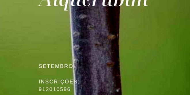 ENXERTIAS em árvores de fruto