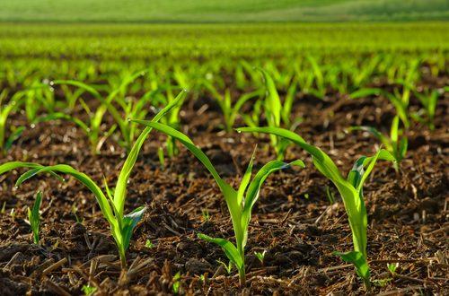 Pequenos Investimentos na Transformação de Produtos Agrícolas abertos até 6 de dezembro nas GAL Aveiro Norte e Aveiro Sul