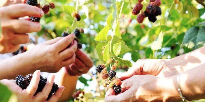 Jovens Agricultores: candidaturas abertas até 8 de setembro