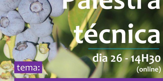 Palestra técnica online sobre o mercado do mirtilo no dia 26
