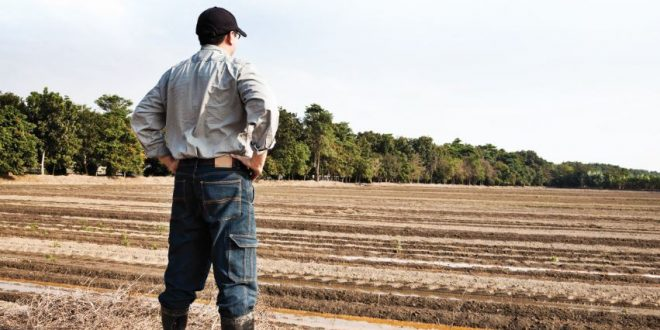 Medida Jovem Agricultor – candidaturas abertas
