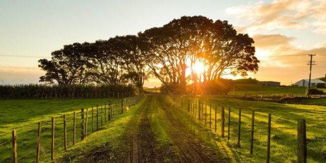 Diversificação de atividades na exploração agrícola: candidaturas abertas até 15 de julho